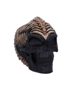 Spine Head Skull (JR) 18.5cm Skulls New in Stock Artist Collections