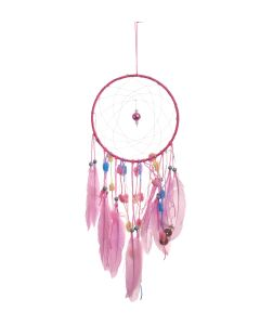 Rose Dreams 20cm Indéterminé Dreamcatchers Premium Range