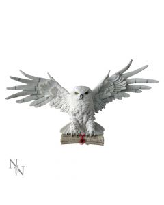 The Emissary 49cm Owls All Animals Value Range