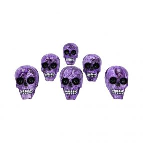 Purple Romance (Medium) 11cm (Pack of 6)
