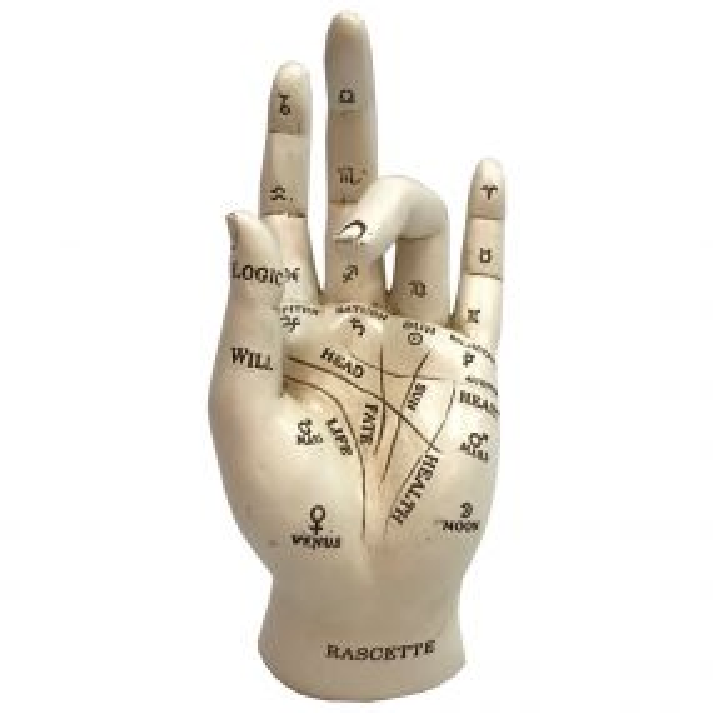 Palmistry 17.7cm