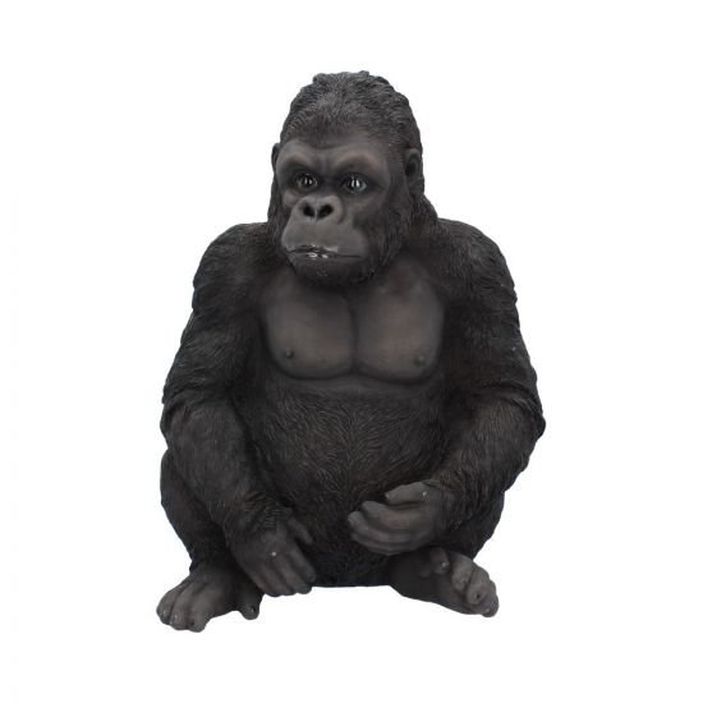 Kong 30cm Apes & Primates De retour en stock
