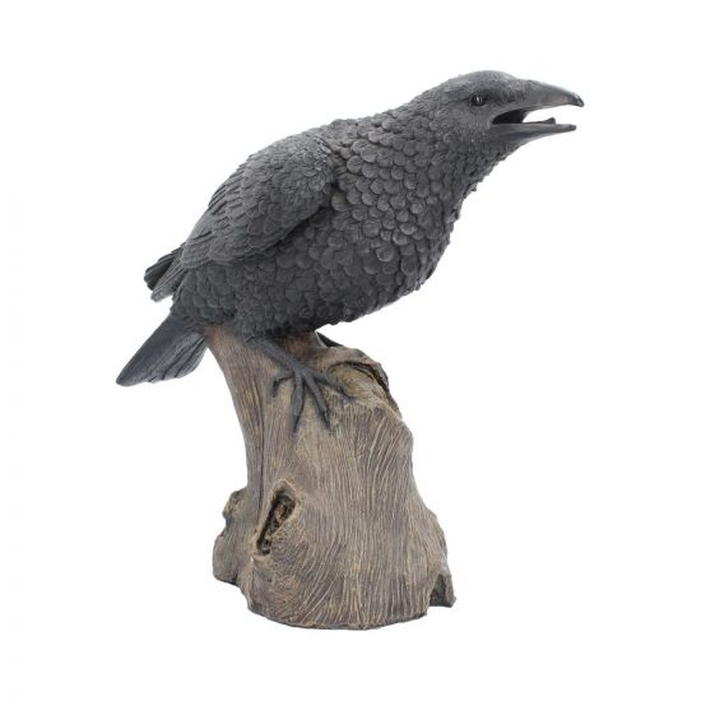 Ravens Cry 35cm Ravens Raven Premium Range